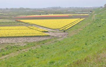 1 阿賀野川河川敷の春
