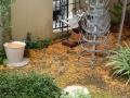 金木犀 2013 台風の後