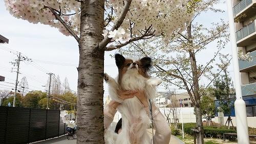 続・お花見④