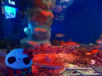 駿河湾のお魚たち