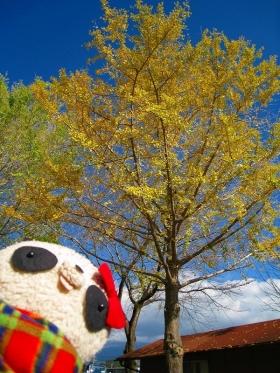 ばぶちゃんとイチョウの木