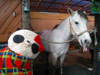 まかいの牧場の馬