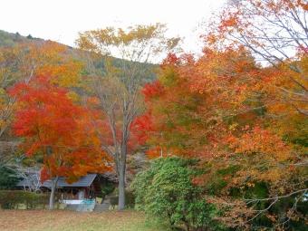 田貫湖の紅葉2013