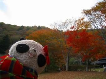 ばぶちゃん田貫湖の紅葉