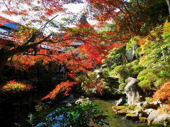 修禅寺の庭園特別公開