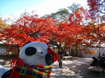 ばぶちゃん修禅寺の境内にて04