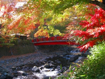 修善寺桂川沿いの紅葉