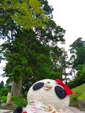 箱根の杉並木
