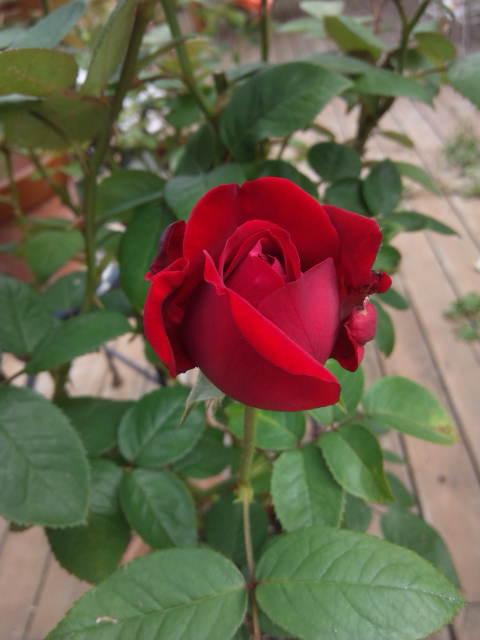 moblog_54036891.jpg