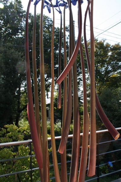s131027芋茎