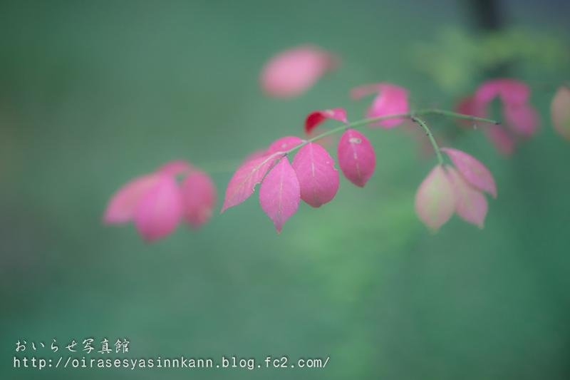 _DSC8073.jpg