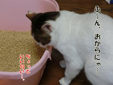CIMG5250.jpg