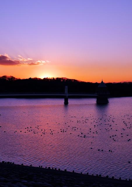 夕刻の水鳥たち