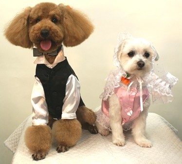 Wedding Dress & Tuxedo