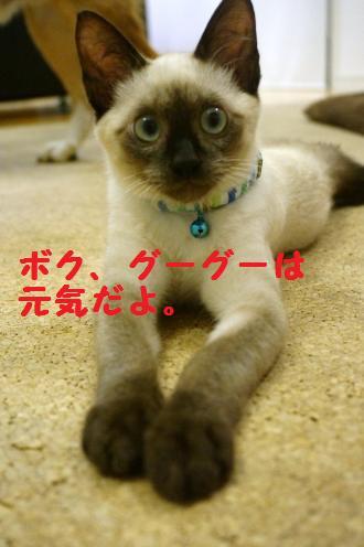 DSC00938+-+繧ウ繝斐・_convert_20130902212337