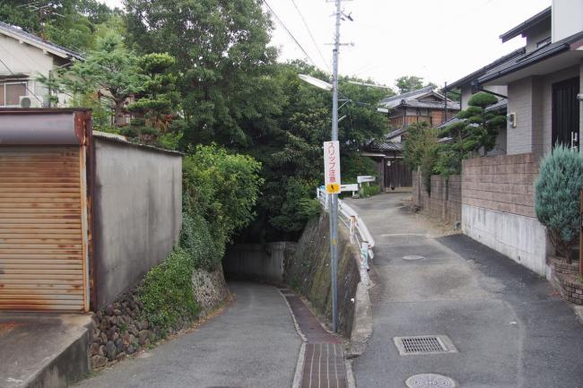 P8051881.jpg