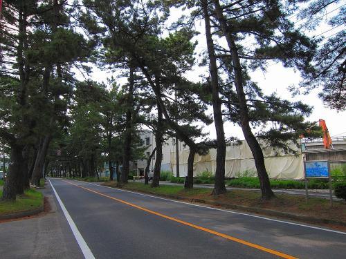 国道一号+渥美半島・知立の松並木