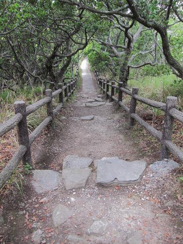 知多半島一周・羽豆岬のウバメガシのトンネル2