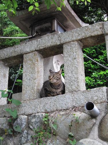 知多半島一周・日長神社入口の猫
