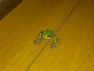 ダスキン蛙1