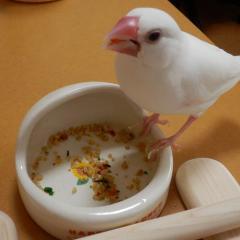 とりこ:何でも食べるわよ!