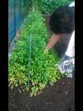 うきうき収穫
