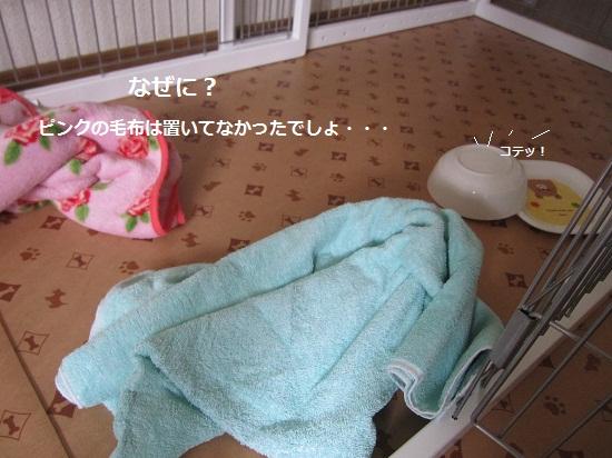 010-3_20130622202549.jpg