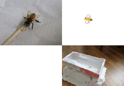 1回目の訪問ハチ