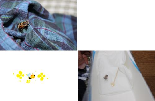 二度目のハチ
