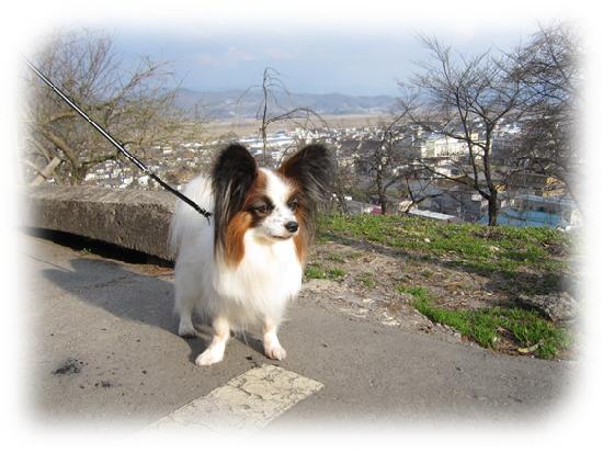 2012年4月の烏帽子山公園1