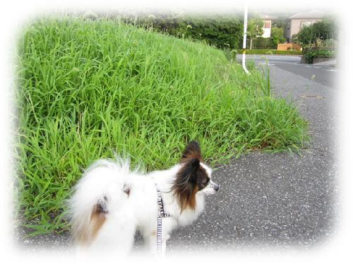 レオ散歩3