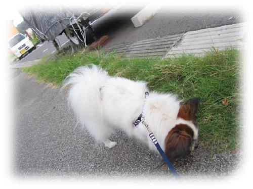 レオ散歩2