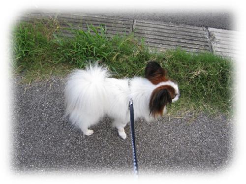 レオ散歩1