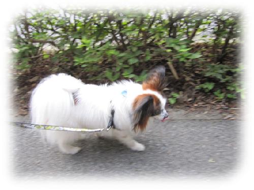 レオ散歩9