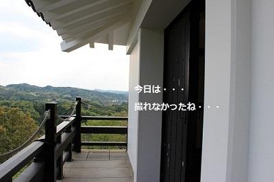 204-2_20130423161826.jpg