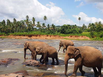 ゾウの孤児院
