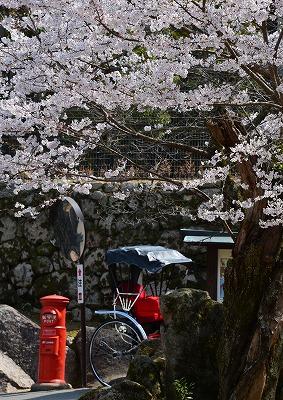 宮島桜6の2