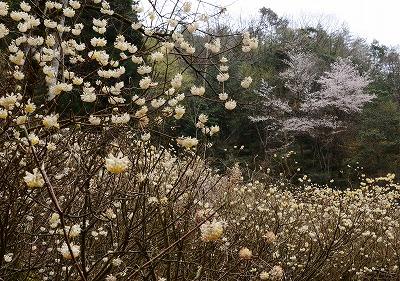 向原の春5
