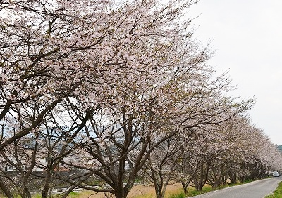 北広島・春 1