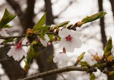 北広島・春 2