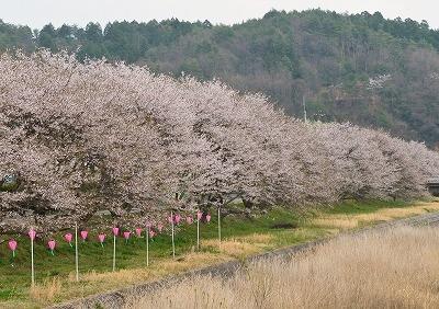 北広島・春3
