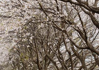 北広島・春4