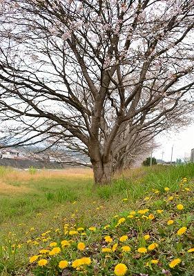 北広島・春 6