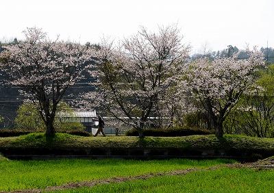 北広島・春 8