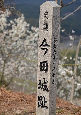こぶしの花6