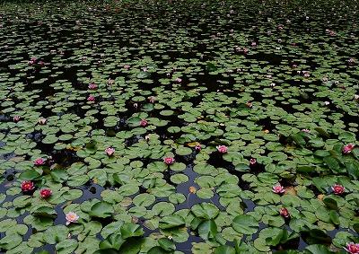 八幡湿原4