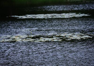 八幡湿原13
