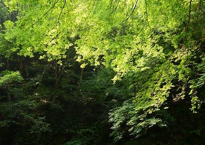 瀬戸の滝2