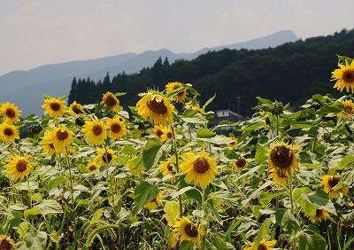 吉和の夏 5