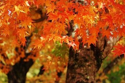 聖湖の秋6